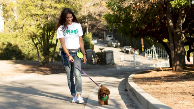 SoftBank-backed dog walking startup shuffles its CEO