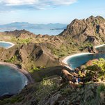 Discovering Indonesia's Wildlife, From Orangutans to Komodo Dragons