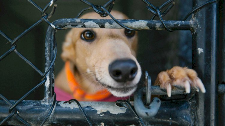 More greyhound mass graves 'will be found' as NSW regulator 'muzzled' by restrictions